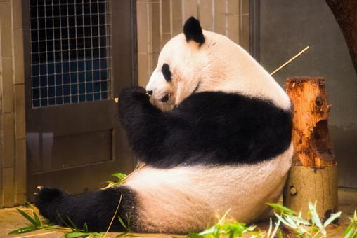 【Ueno Zoo Garden】 Giant Panda
