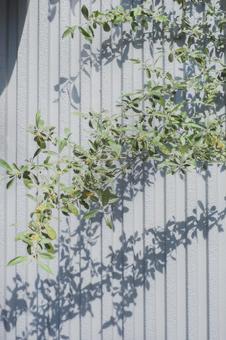 올리브 잎