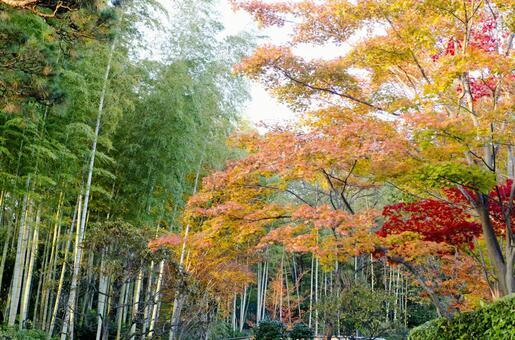 Fall landscape 31