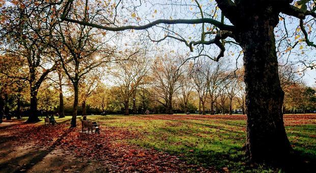 Autumn foliage in the English park