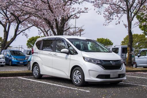 Sakura and white car