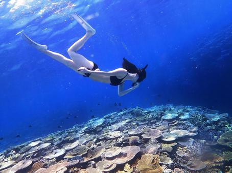 산호에 수영 비키니 여성