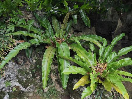 오키나와 이시가키 섬 · 오오타니 와타리