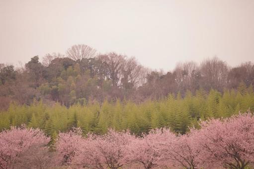 벚꽃길의 원경