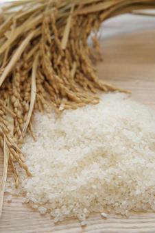 벼와 쌀 5