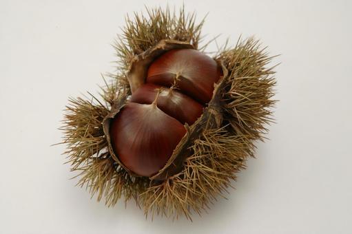 Chestnut 4