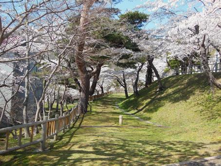 Hakodate Park Spring