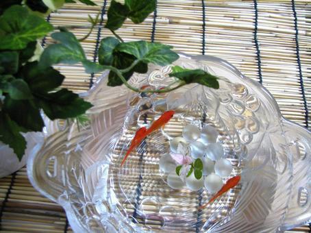 Goldfish 19