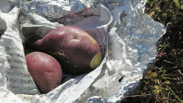 군 고구마 군 고구마 야키 고구마 군 고구마 구이 감자 모닥불 캠프 야외 음식