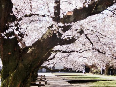 Tokyo Institute of Technology Sakura 2