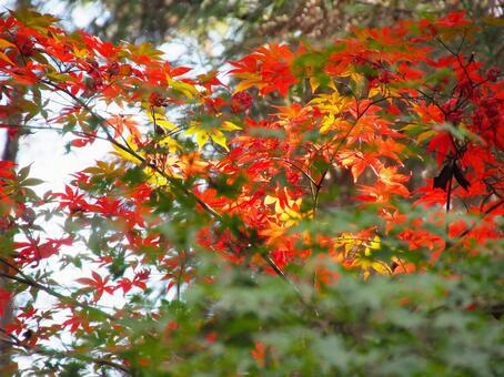 Sunlight through the fall