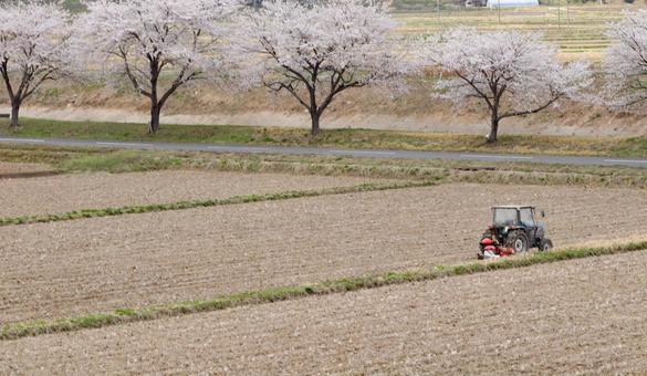 봄 풍경 벚꽃과 농사