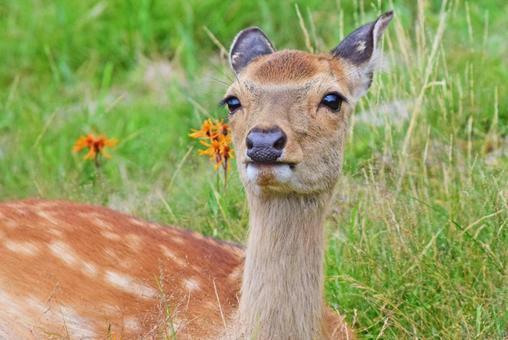 Deer sitting in the field