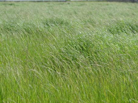 바람에 흔들리는 초원