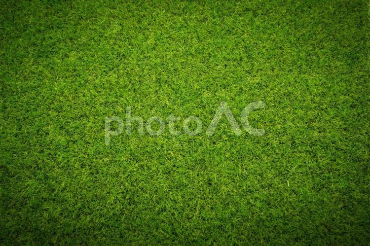 芝生_4_スポットライトの写真