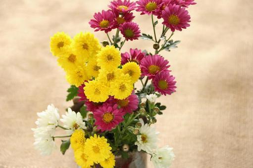 Small daisy chrysanthemum