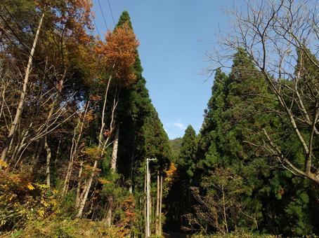 후쿠시마 현 후쿠시마시 大笹生 숲 단풍