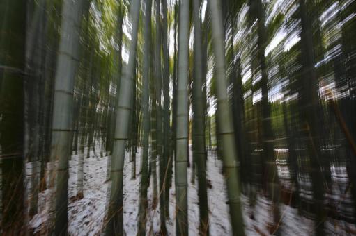 Winter bamboo grove 3