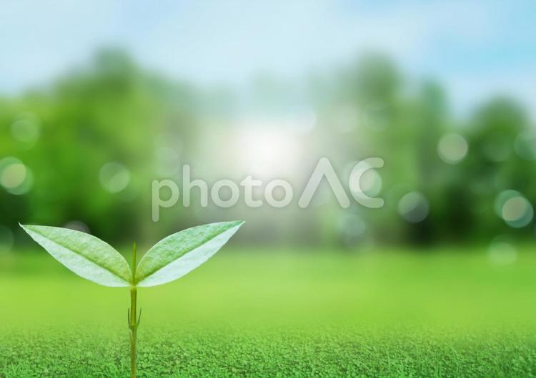 芽生え 緑のキラキラ背景の写真