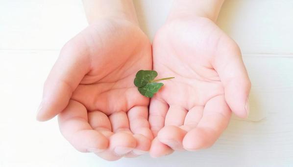 Four-leaf clover plant nature