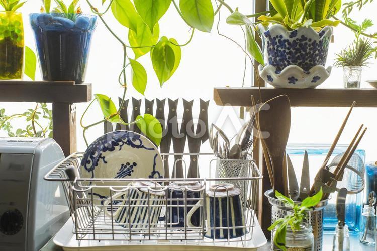 洗った食器を乾かす_観葉植物の写真
