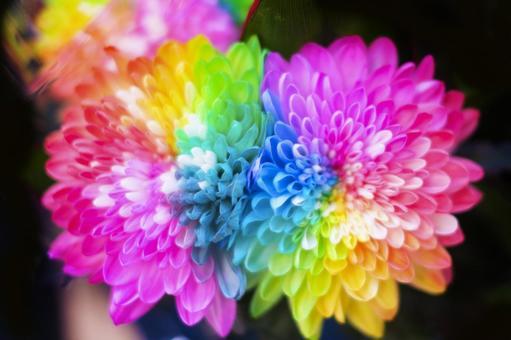 화려한 무지개 빛 꽃