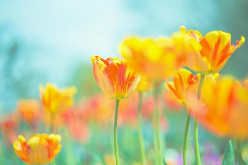Fantastic flowers 137