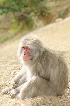 Monkey 1