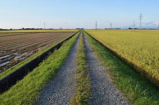 Farm road and rural landscape