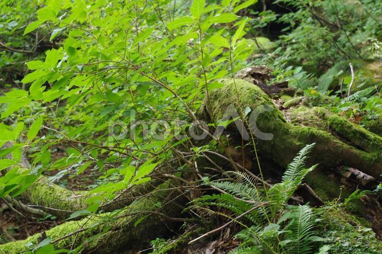 獅子ヶ鼻湿原の写真