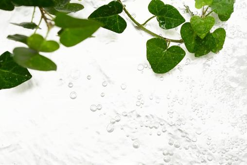 Water bubbles running water leaves