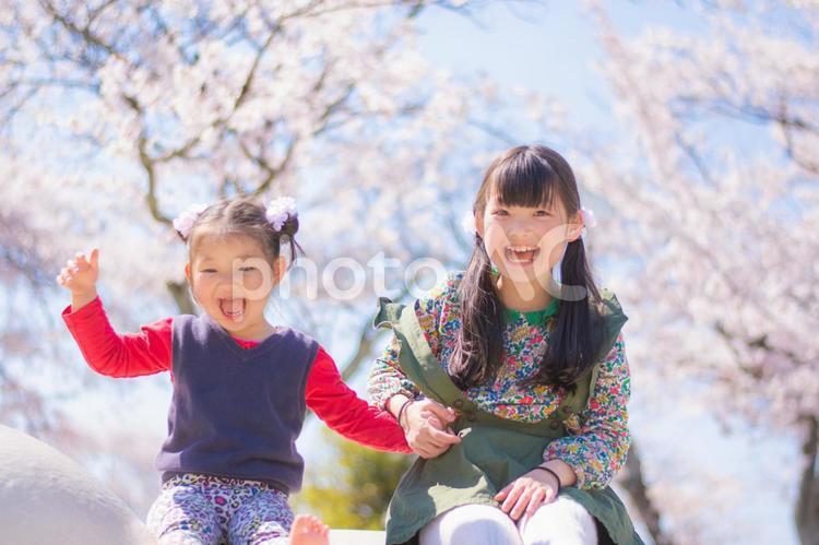 春 仲良し姉妹の写真