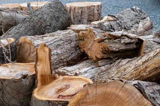 벌목 한 나무