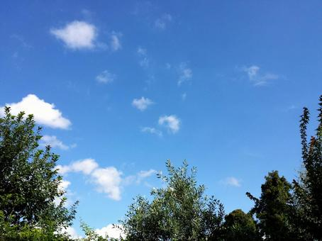 Sky and green ②
