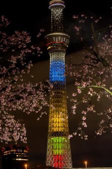 Okan Sakura and Sky Tree