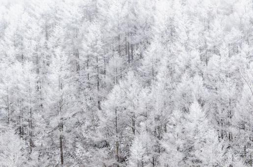 Forest with snow