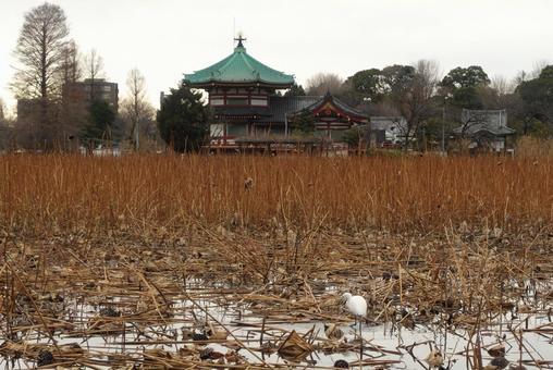 Winter Shinobazu Pond and Shinobazu Pond Houtendo distant view