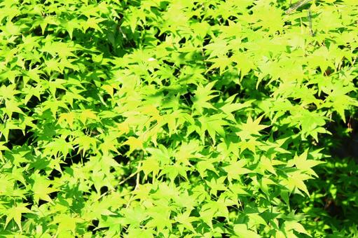 Fresh green 02
