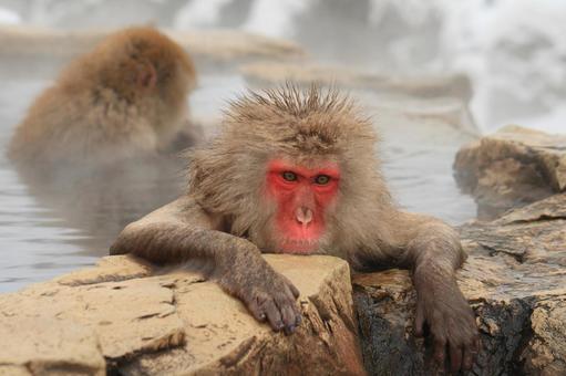 一個沐浴在溫泉里的僧侶