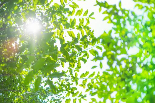 Looking up at the trees_fresh green_sun
