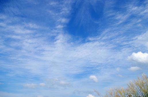 Autumn sky and Susuki