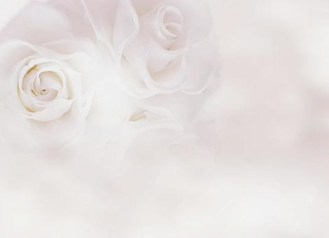 Pale rose_ background