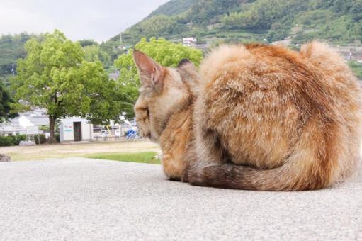 길에 앉아 고양이