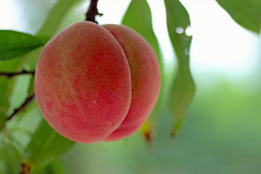 Peach _ up 02