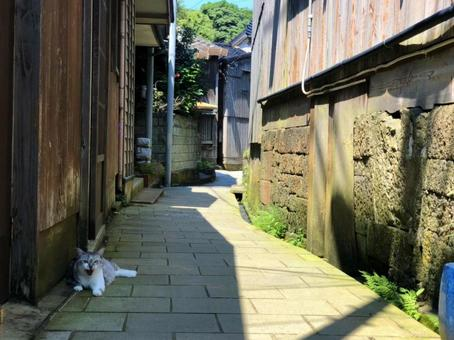 Cat in the back alley