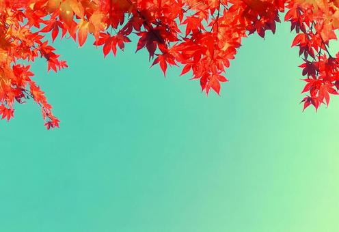 Frame of maple leaves that turn red in autumn