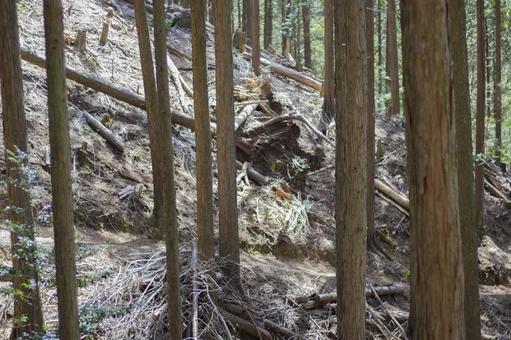 台風一過の林3