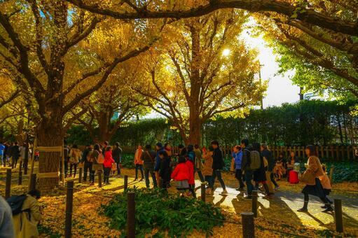 Shinku gaien ginkgo tree lined ginkgo