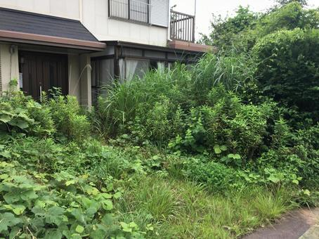 Unoccupied garden with all-you-can-grow weeds