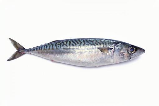 Raw mackerel